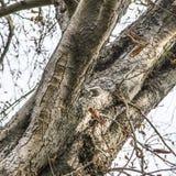 Ένας σκίουρος Στοκ φωτογραφία με δικαίωμα ελεύθερης χρήσης