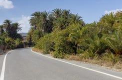 Ένας στενός, αγροτικός δρόμος στο δάσος ημερομηνίας στοκ εικόνα