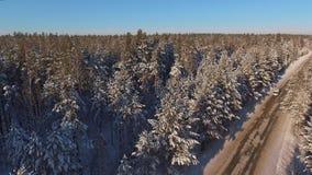Ένας στενός δασικός δρόμος μεταξύ των χιονισμένων έλατων και των πεύκων απόθεμα βίντεο