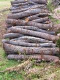 Ένας σωρός του καυσόξυλου των βαλανιδιών ακροποταμιών Στοκ φωτογραφία με δικαίωμα ελεύθερης χρήσης