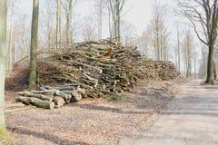 Ένας σωρός του ξύλου Στοκ Εικόνα