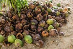 Ένας σωρός των απορριμμένων χρησιμοποιημένων φλοιών καρύδων, των μερών καφετιού και των πρασίνων στοκ φωτογραφία με δικαίωμα ελεύθερης χρήσης