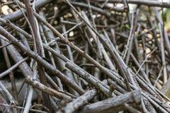 Ένας σωρός των ξηρών κλάδων Στοκ φωτογραφία με δικαίωμα ελεύθερης χρήσης