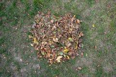 Ένας σωρός των φύλλων σκούπισε μαζί με μια τσουγκράνα σε ένα λιβάδι στον κήπο τα φύλλα πηγαίνουν σε έναν κάδο στοκ εικόνες με δικαίωμα ελεύθερης χρήσης