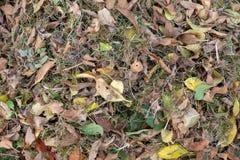 Ένας σωρός των φύλλων σκούπισε μαζί με μια τσουγκράνα σε ένα λιβάδι στον κήπο τα φύλλα πηγαίνουν σε έναν κάδο στοκ εικόνα