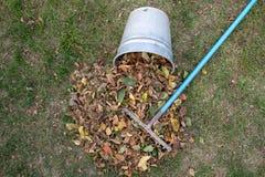 Ένας σωρός των φύλλων σκούπισε μαζί με μια τσουγκράνα σε ένα λιβάδι στον κήπο τα φύλλα πηγαίνουν σε έναν κάδο στοκ φωτογραφίες