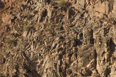 Ένας τοίχος πετρών στο φαράγγι Στοκ Φωτογραφία