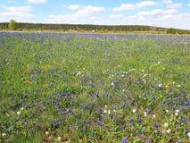 Ένας τομέας με τα ζωηρόχρωμα λουλούδια και πράσινη, πολύβλαστη χλόη κάτω από τον ανοικτό μπλε ουρανό με τα άσπρα σύννεφα Στην από Στοκ φωτογραφία με δικαίωμα ελεύθερης χρήσης