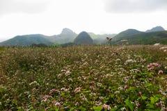 Ένας τομέας λουλουδιών, εκτάριο Giang, Βιετνάμ Στοκ εικόνα με δικαίωμα ελεύθερης χρήσης