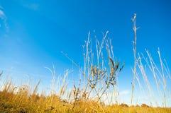 Ένας τομέας σανού με ένα υπόβαθρο μπλε ουρανού στοκ φωτογραφία με δικαίωμα ελεύθερης χρήσης