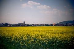 Ένας τομέας των κίτρινων λουλουδιών στη Γαλλία Στοκ Εικόνα