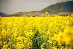 Ένας τομέας των κίτρινων λουλουδιών στη Γαλλία Στοκ φωτογραφία με δικαίωμα ελεύθερης χρήσης