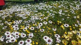 Ένας τομέας των wildflowers Στοκ εικόνες με δικαίωμα ελεύθερης χρήσης