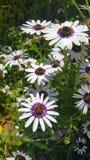 Ένας τομέας των wildflowers Στοκ Φωτογραφία