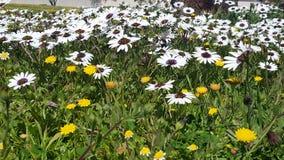 Ένας τομέας των wildflowers Στοκ φωτογραφία με δικαίωμα ελεύθερης χρήσης