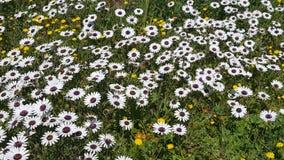 Ένας τομέας των wildflowers Στοκ Εικόνες