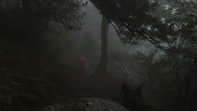 Ένας τουρίστας σε ένα αδιάβροχο κατεβαίνει μια ορεινή κλίση μέσω ενός θλιβερού ομιχλώδους δάσους απόθεμα βίντεο