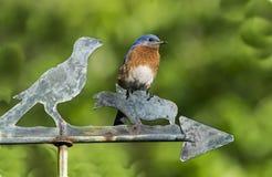 Ένας τρόπος Bluebird στοκ εικόνα με δικαίωμα ελεύθερης χρήσης