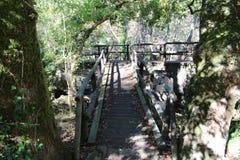 Ένας τρόπος throug η δασική γέφυρα Στοκ φωτογραφία με δικαίωμα ελεύθερης χρήσης