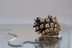 Ένας υγρός κώνος πεύκων βρίσκεται σε μια ομάδα του νερού Στοκ εικόνες με δικαίωμα ελεύθερης χρήσης