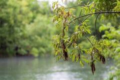 Ένας υγρός κλάδος δέντρων με έναν ιστό αράχνης Στοκ Φωτογραφία