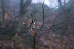 Ένας υγρός κλάδος δέντρων με τον ιστό αράχνης στο υπόβαθρο Στοκ φωτογραφία με δικαίωμα ελεύθερης χρήσης