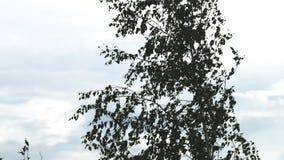 Ένας υπερυψωμένος γερανός - κουλουριάστε tong τη μεταφορά μιας σπείρας χάλυβα σε μια οριζόμενη θέση σε μια αυτοματοποιημένη δυνατ απόθεμα βίντεο