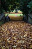 Ένας φθινοπωρινός περίπατος & πεσμένα φύλλα Στοκ Εικόνες