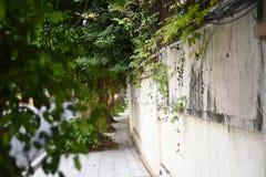 Ένας φράκτης που καλύπτεται από τις εγκαταστάσεις στοκ φωτογραφίες με δικαίωμα ελεύθερης χρήσης