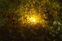 Ένας φωτεινός λαμπτήρας σφαιρών στα πυκνά αλσύλλια των πράσινων θάμνων στο σκοτάδι στοκ φωτογραφίες με δικαίωμα ελεύθερης χρήσης