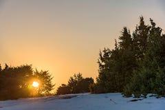 Ένας φωτεινός πορτοκαλής ήλιος λάμπει μέσω του ιουνιπέρου Ρωσία, Stary Krym Στοκ Εικόνες