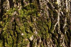Ένας φλοιός του δέντρου Στοκ Φωτογραφία