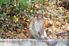 Ένας χαριτωμένος με μακριά ουρά πίθηκος macaque σε ένα τροπικό δάσος σε Chonburi, Ταϊλάνδη Στοκ Εικόνες