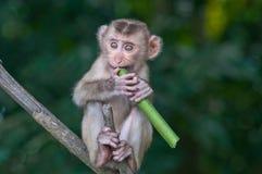 Ένας χαριτωμένος μικρός πίθηκος Στοκ φωτογραφία με δικαίωμα ελεύθερης χρήσης