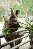 Ένας χαριτωμένος ρινόκερος στο ζωολογικό κήπο που έχει πολλά ζώα στοκ εικόνα