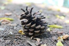 Ένας χαυλιόδοντας ενέπεσε στο δάσος στο μέσο του καλοκαιριού στοκ φωτογραφίες με δικαίωμα ελεύθερης χρήσης