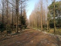 Ένας χωμάτινος τρόπος το πέρασμα των δασών στοκ φωτογραφία