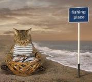 Ένας ψαράς γατών στην παραλία Στοκ Εικόνες