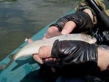 Ένας ψαράς παρουσιάζει πρόσφατα πιασμένο ψάρι στοκ φωτογραφίες
