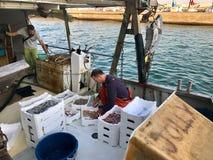 Ένας ψαράς ταξινομεί τη σύλληψή του σε μια δεμένη αλιεύω-βάρκα Στοκ Εικόνες