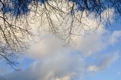 Ένας όμορφος μπλε ουρανός με τα άσπρους σύννεφα και τους κλάδους του δέντρου Στοκ φωτογραφία με δικαίωμα ελεύθερης χρήσης