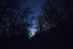 Ένας όμορφος νυχτερινός ουρανός, ο γαλακτώδης τρόπος και  δέντρα Στοκ φωτογραφίες με δικαίωμα ελεύθερης χρήσης
