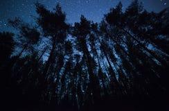 Ένας όμορφος νυχτερινός ουρανός, ο γαλακτώδης τρόπος και  δέντρα Στοκ εικόνα με δικαίωμα ελεύθερης χρήσης