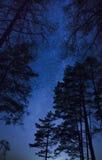 Ένας όμορφος νυχτερινός ουρανός, ο γαλακτώδης τρόπος και τα δέντρα Στοκ εικόνα με δικαίωμα ελεύθερης χρήσης