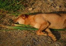 Ένας ύπνος σκυλιών στον αγροτικό δρόμο στην ηλιόλουστη ημέρα Στοκ εικόνα με δικαίωμα ελεύθερης χρήσης