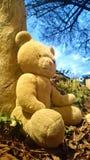 Ένας eyed teddy Στοκ φωτογραφίες με δικαίωμα ελεύθερης χρήσης