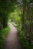 Ένας walkaway στο δάσος Στοκ φωτογραφία με δικαίωμα ελεύθερης χρήσης