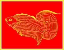 Έναστρα ψάρια Στοκ φωτογραφία με δικαίωμα ελεύθερης χρήσης