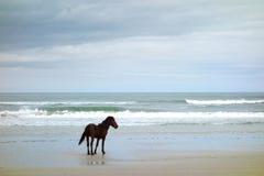 Ένα άγριο άλογο στοκ φωτογραφία με δικαίωμα ελεύθερης χρήσης