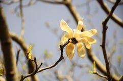 Ένα άλλο λουλούδι της άνοιξη στην Κίνα ΙΙΙ στοκ φωτογραφία